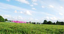 Free Beautifull Skies In Park Stock Photos - 2779973