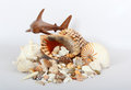 Free Shark And Sea Shells Royalty Free Stock Photography - 27703197