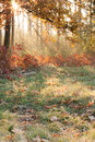 Free Autumn Nature - The Sun&x27;s Ray. Oak Stock Images - 27705764