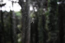 Free Spider In Web Stock Images - 27700394
