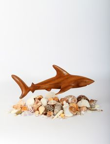 Free Shark And Sea Shells Stock Image - 27703091