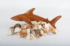 Free Shark And Sea Shells Royalty Free Stock Images - 27703319