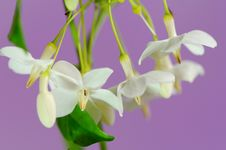 Free White Flowers. Stock Photo - 27703360