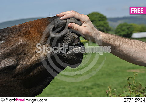 Free Horse Hand Stock Images - 27715934