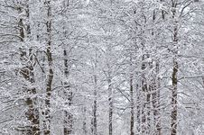 Free Winter Background Royalty Free Stock Photography - 27710187