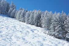Free Mountain Ski Slope And Winter Forest Stock Image - 27710301