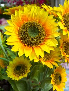 Free Plastic Sunflower Stock Photography - 27718502
