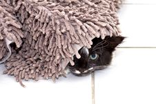 Free Kitten Hiding Under Carpet Royalty Free Stock Image - 27723566