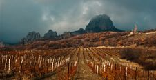 Free Vineyard In Crimea Stock Photos - 27723663