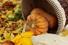 Harvested Pumpkins With Fall Leaves Stock Images