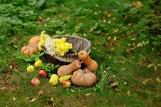Free Harvested Pumpkins With Fall Leaves Stock Images - 27736874