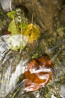 Free Leaves Under Water Royalty Free Stock Photo - 27742765