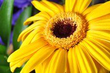 Free Yellow Flower Royalty Free Stock Image - 27742956