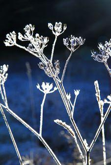 Free Frozen Plant Stock Photo - 27746270
