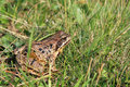 Free A Frog In The Grass Stock Image - 27759021
