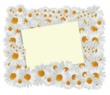 Free Daisy Greeting Card Royalty Free Stock Photos - 27755588