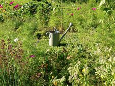 Free Vegetable Garden Stock Photo - 27757180