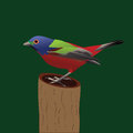Free Painted Bunting Stock Photography - 27765352