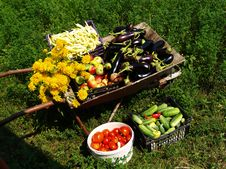 Vegetables Fruits And Flowers Stock Image