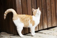 Free Young Cat Outside Stock Photo - 27776770