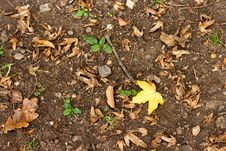 Free Leaf On The Ground Stock Photo - 27778240