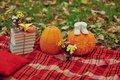 Free Harvested Pumpkins With Fall Leaves Stock Photos - 27781703