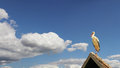 Free Stork On The Roof Stock Images - 27787804