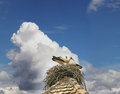 Free Storks In The Nest Stock Image - 27787841