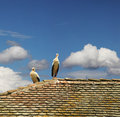 Free Two Storks Stock Photography - 27787892