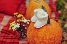Free Harvested Pumpkins With Fall Leaves Stock Photo - 27781580