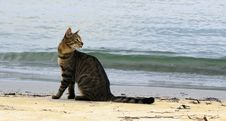 Free The Homeless Cat Sits On Seacoast Stock Photography - 27785832