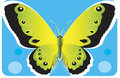 Free Butterfly Stock Images - 2782544