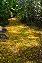 Free Yellow Petals Path Royalty Free Stock Photo - 2783555