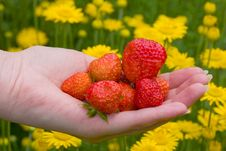 Free Strawberries And Flowers Royalty Free Stock Images - 2780789