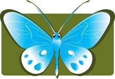 Free Butterfly Stock Images - 2782534
