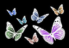 Free Butterflies Royalty Free Stock Image - 2782746