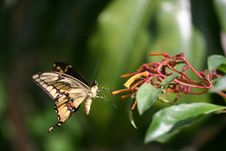 Free Butterfly Landing On Plant Royalty Free Stock Photos - 2783138