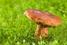 Free Big Mushroom On A Meadow Stock Images - 2783844