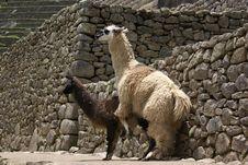 Lovemakers At Machu Pichu Stock Photos