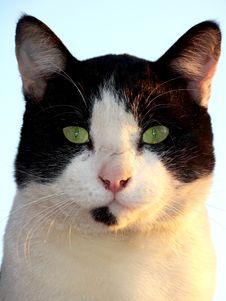 Free Cat Royalty Free Stock Photos - 2783928