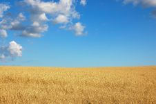 Free WHEAT BEFORE HARVEST Stock Photography - 2784002