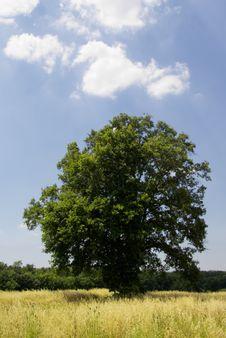 Free Tree Royalty Free Stock Photo - 2784305