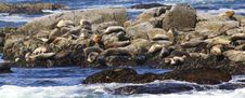 Free Harbor Seals Stock Photos - 2785083