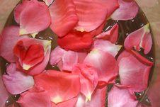Free Rose Petals Stock Photo - 2785730