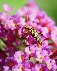 Free Yellow Bug Stock Photography - 2787672