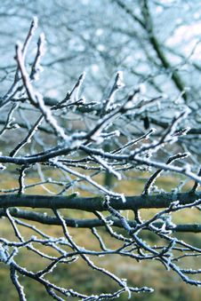 Free Frosty Branches Stock Photo - 2789020