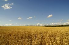 Free Gold Wheat Royalty Free Stock Image - 2789636