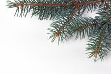 Free Fir Tree Stock Images - 27800614