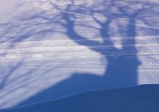 Free Shadow From The Big Tree On A Snow Stock Photo - 27803340