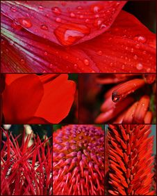 Red Blossoms Royalty Free Stock Photography